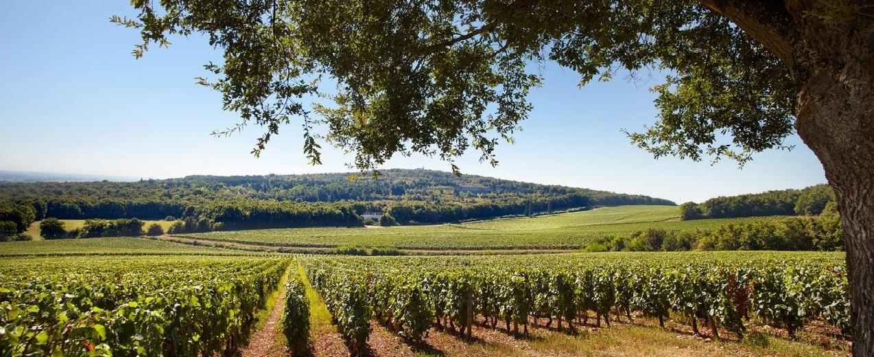 2018 Burgundy En Primeur: New additions