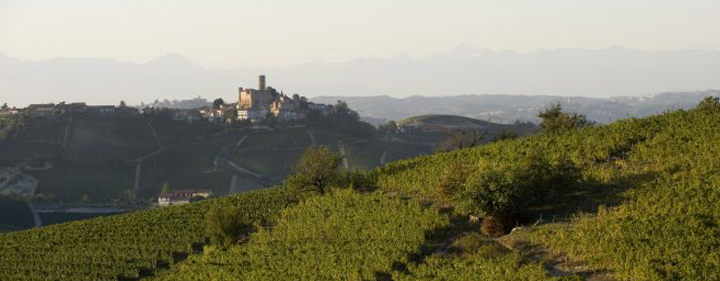 2015 Piemonte: Deceptively classic wines from a warm vintage