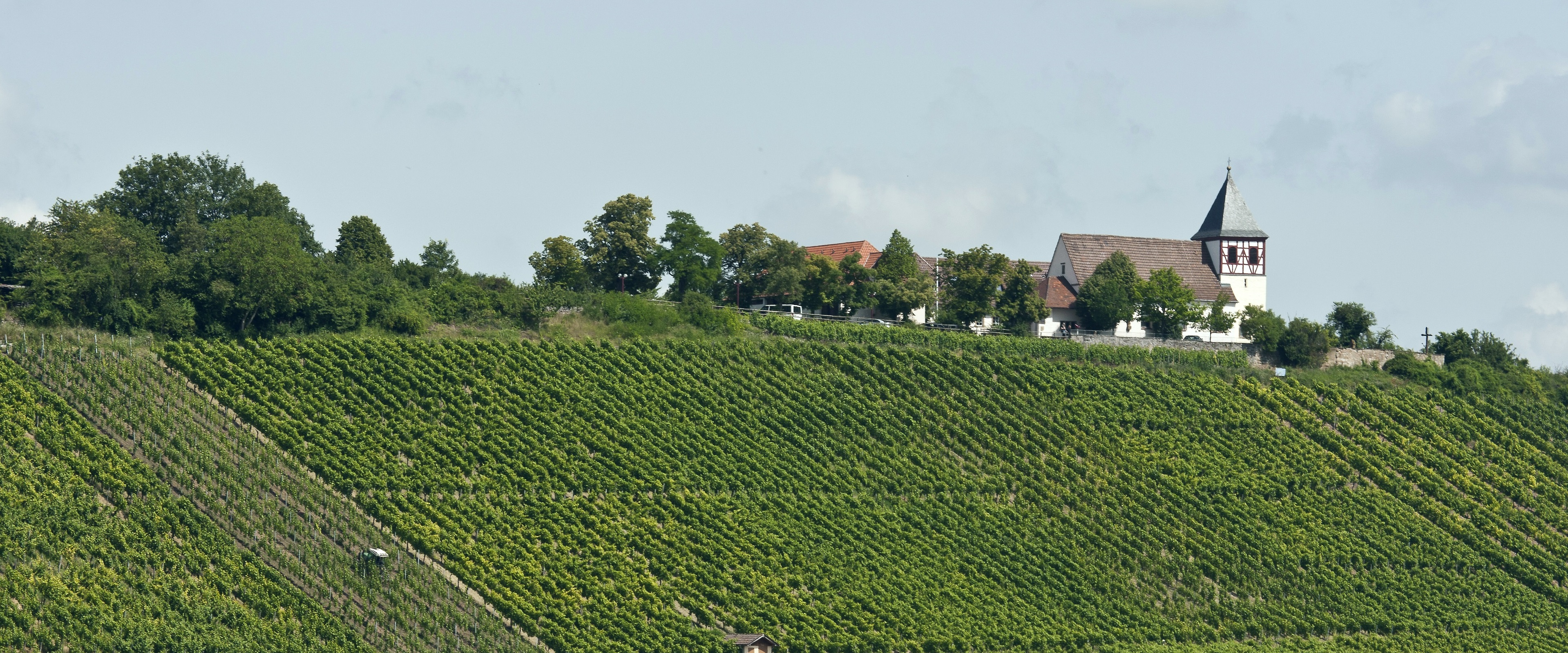 NEW: Two fascinating Pinot Noir from an upcoming German estate