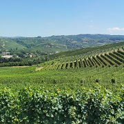 2015 Barolo: Deceptively classic wines from a warm vintage